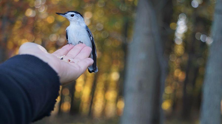 Bird perching on human hand in autumn