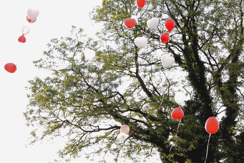 Hello World Hello Hamburg Taking Pictures Click Click 📷📷📷 Celebration Balloon Red Tree Low Angle View Outdoors Balloons 🎈 Flying Ballons Real Life Colorful Colorsplash Looking Up Sky Clouds Canon Eye For Details Hansestadt Hamburg Through My Eyes Germany🇩🇪