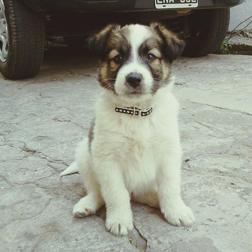 Perritooo! Mi Mascota Dog