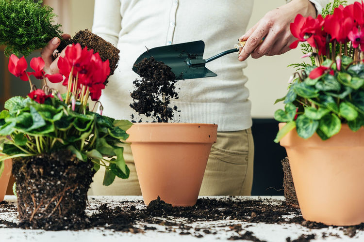 Real People Plant Midsection Freshness Potted Plant Lifestyles Nature Food And Drink People Indoors  Table Growth Hand Flower Women Holding Standing Leaf Leisure Activity Planting Gardening Flower Pot Preparing Food Flower Arrangement Home Interior Copy Space Flowerpot Young Adult Lifestyle Seeds Bio Eco Earth