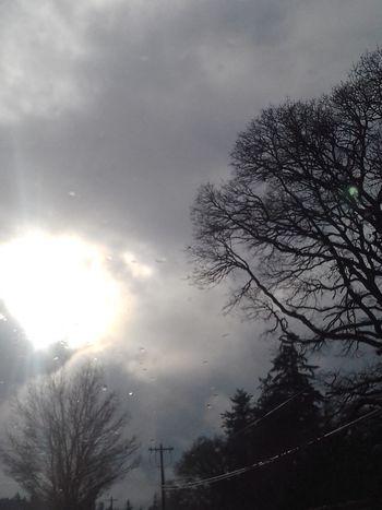 Tree Cloud - Sky Sky Storm Cloud No People Outdoors Beauty In Nature Sun Winter Sun & Clouds