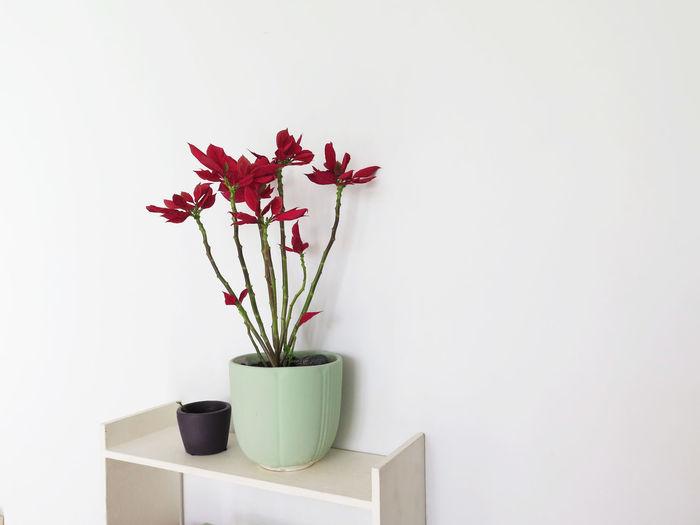Flower vase against white wall