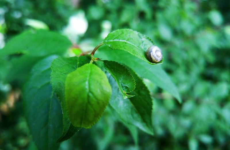 Leaf One Animal Insect Animals In The Wild Green Color Animal Themes Close-up Nature Plant Animal Wildlife No People Outdoors Growth Day Fragility Beauty In Nature Freshness