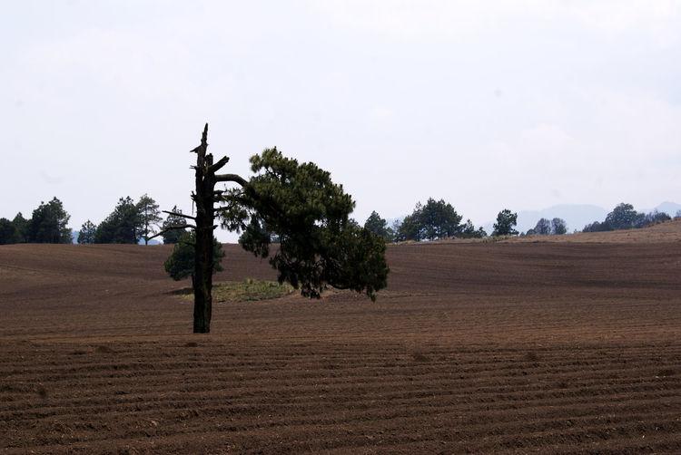 Campo EnTodasPartes Landscape Nature Paisaje Tresmarias Zezeccampa árbol