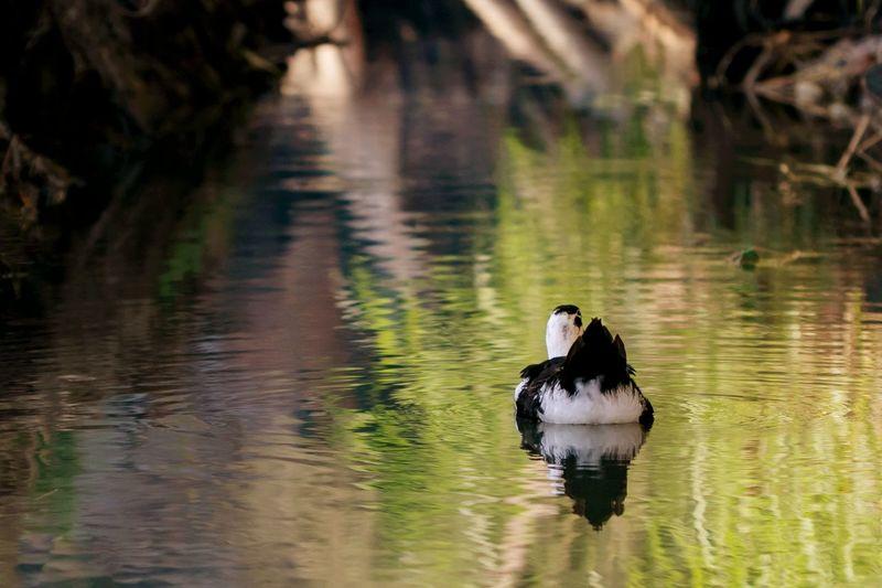duck world 🦆