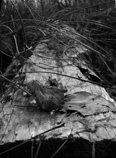 Dying Adventerous Angle Animals In The Wild Bird Bush Crumbled Day Dry Dry Leaves Even Grass Leaves Log Mammal Nature New Point Of View No People One Animal Outdoors Perspective Straight Timber Wood WoodLand