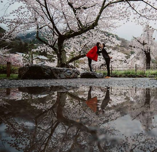 Ultimate Japan Mafotografia Moodygrams Ktraveljourney Dividiary Naturelovers Sakura2016 Cherry Blossoms