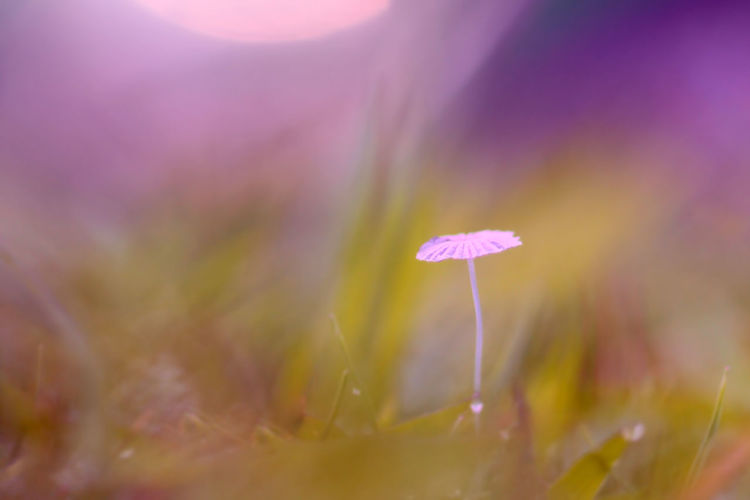 background of grass and mushrooms with bokeh Flower Vulnerability  Fragility Plant Beauty In Nature Flowering Plant Growth Freshness Close-up Selective Focus Pink Color Nature Petal Inflorescence Flower Head No People Outdoors Day Plant Stem Tranquility Purple Soft Focus