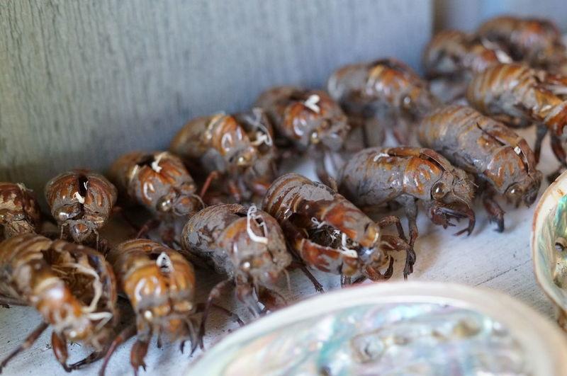 High angle view of cicada