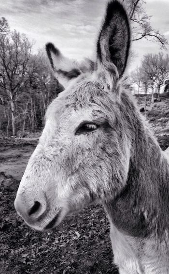 Regarder avec ses oreilles Iphoneonly IPhoneography IPhone Faune Black & White Monochrome