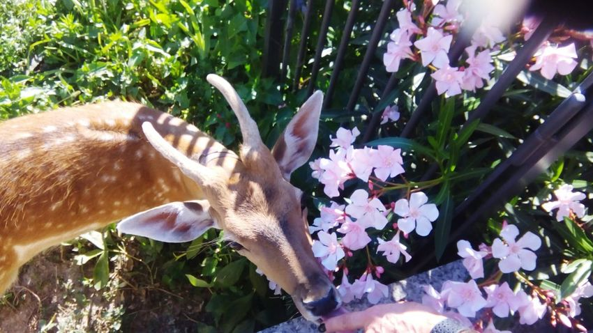 Fawn among the flowers Fawn Fawn😍 Fawn Lying In The Grass Flower Flower Head Close-up Plant Blooming Plant Life