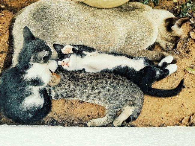 وقت القيلولة 😪 Siesta Naps Cat♡ Family Laziness Resting Animal Themes