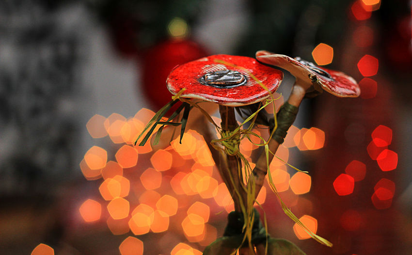 Focus On Foreground Close-up Decoration No People Red Illuminated Outdoors Selective Focus Night Nature Art And Craft Christmas Decoration Lighting Equipment Pattern Creativity Metal Holiday Christmas Electric Lamp Poppy Flowers