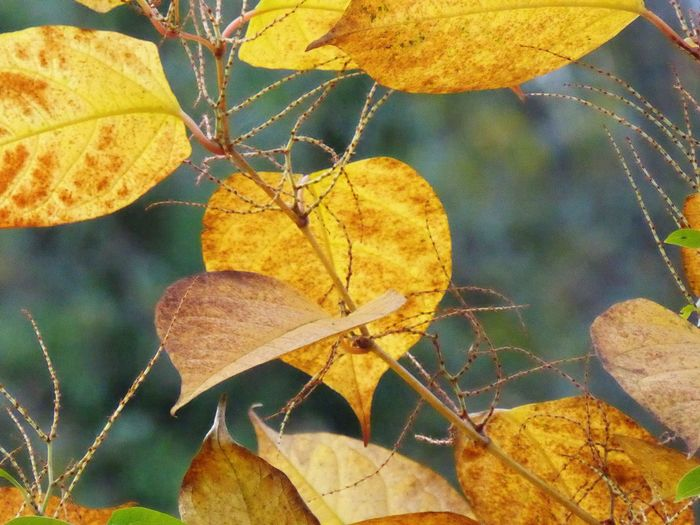 Nature Leaf Close-up Outdoors Autumn Fall Scotland Macro Tree Beauty In Nature Dying Leaves First Eyeem Photo