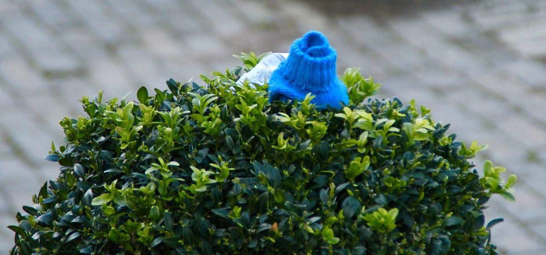 Blue Blue Glove Bush Canon1200DPhotography Canonphotography Close-up Day Focus On Foreground Glove Green Green Color Leaf Lonely Glove Lost Clothing Lost Glove Lost Property Nature Outdoors Plant Selective Focus Shrub