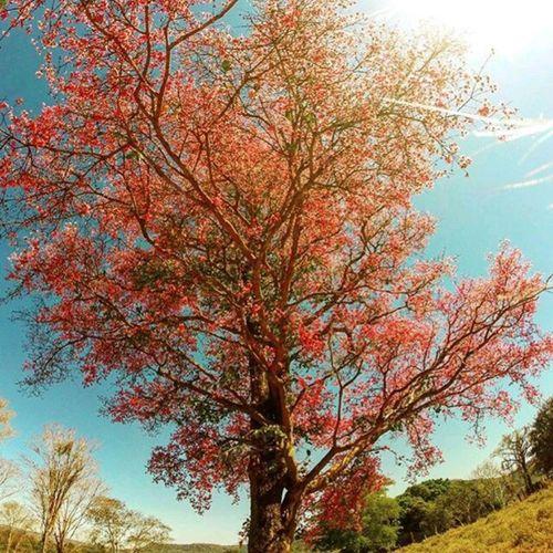 Cerrado Mato-Grossense. Foto: @gabi_andrades_ _______________________ Cerrado CerradoMatoGrossense MatoGrosso_Brasil Matogrosso Bresil  Brasil Brasilien Brazil Southamerica World Travel Nature IloveBrazil VisitBrazil CentroOeste VejaMatoGrosso MtcomVc DestinosTuristicosMT MatoGrossoéLindo Paisagens BrasilCentral CentroSul