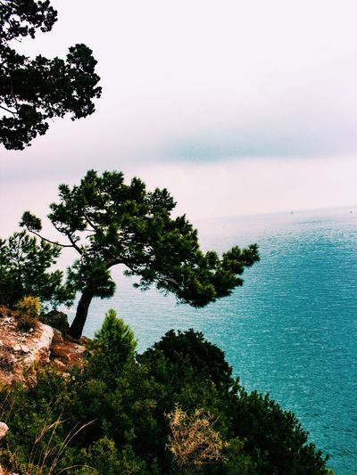 Sıçan Adası #landscape #sea Tree Sky Nature Beauty In Nature No People Growth Tranquil Scene Outdoors Sea Water Tranquility Day First Eyeem Photo