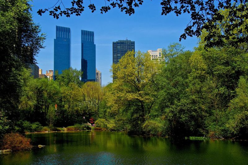 GREEN CITY New York City Architecture Central Park Trees Green Lake Street Photography Two Towers Nature Oscar Cardoso