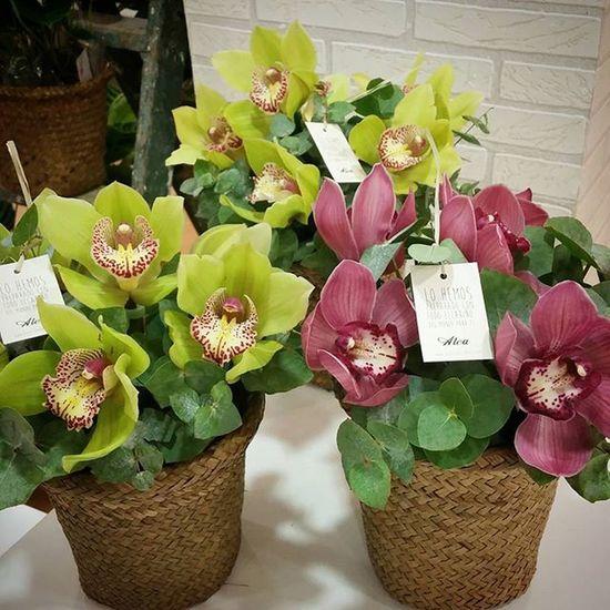 Os presentamos nuestros cubos de orquídeas con motivo de nuestro 10 aniversario. Los tenéis en 3 tamaños a partir de 24,95 € y estarán disponibles hasta navidades. No os parecen ideales? Luxuryflowers Luxury Cesta Flores Cubo Alea Aniversario Anniversary Orquídea Orchid Trendy Flowers Fleurs Fiori Blumen Lovemyjob