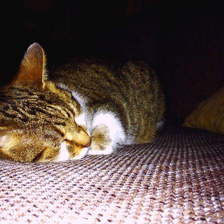 Cat Cutie Sleepness Dreaming Omgsocute Mybaby