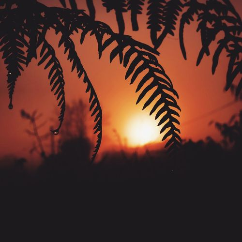 Subset Nature Sunset Silhouette Sky Growth Scenics Beauty In Nature Outdoors Tranquility No People Tranquil Scene Plant Tree Leaf Clear Sky Close-up Day Best EyeEm Shot EyeEmBestPics Forest Mothernature EyeEm Masterclass Eye4photography  Eyeemphotography EyeEmNewHere