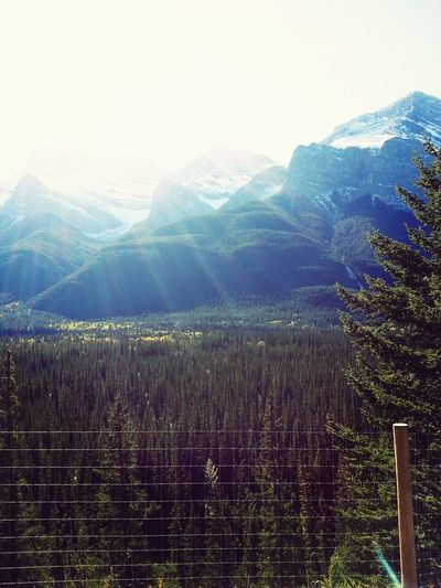 Banff  Banff National Park  Naturelovers True Beauty!