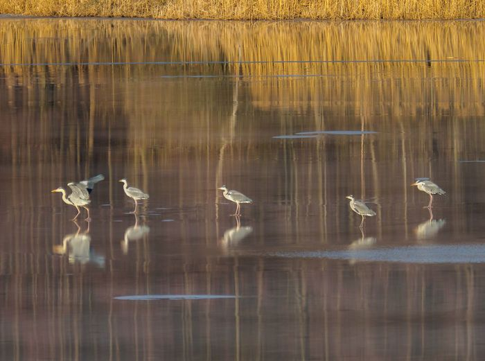 the Queue for take-off Swimming Water Bird Animal Animal Themes Group Of Animals
