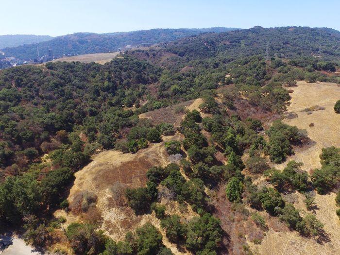 Hills Golden Hills California Summer EyeEm Selects Tree Mountain Sky Landscape Plant