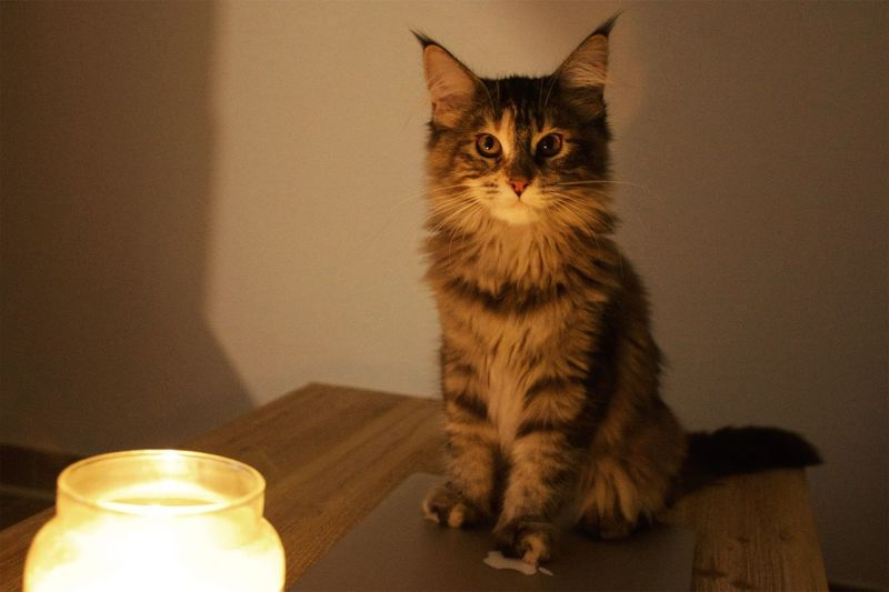 Close-up of cat sitting by illuminated lamp on table
