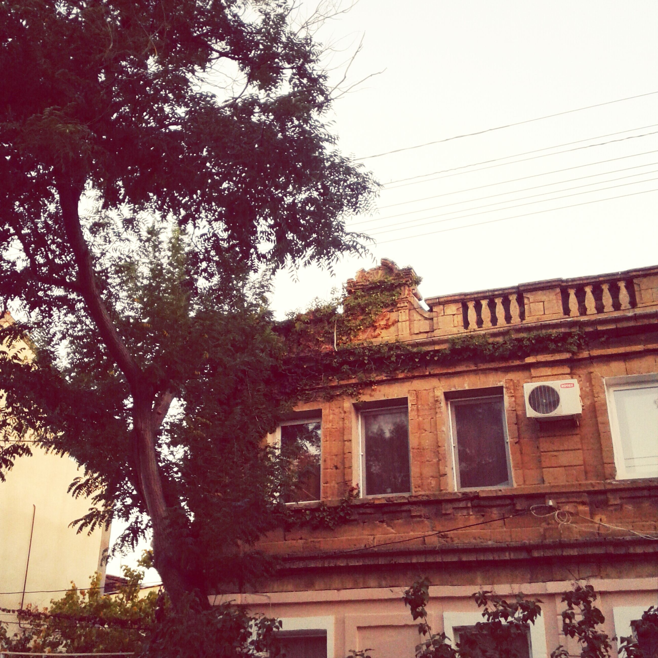 architecture, built structure, building exterior, low angle view, tree, house, residential building, window, residential structure, sky, building, clear sky, old, outdoors, day, no people, branch, growth, exterior, roof