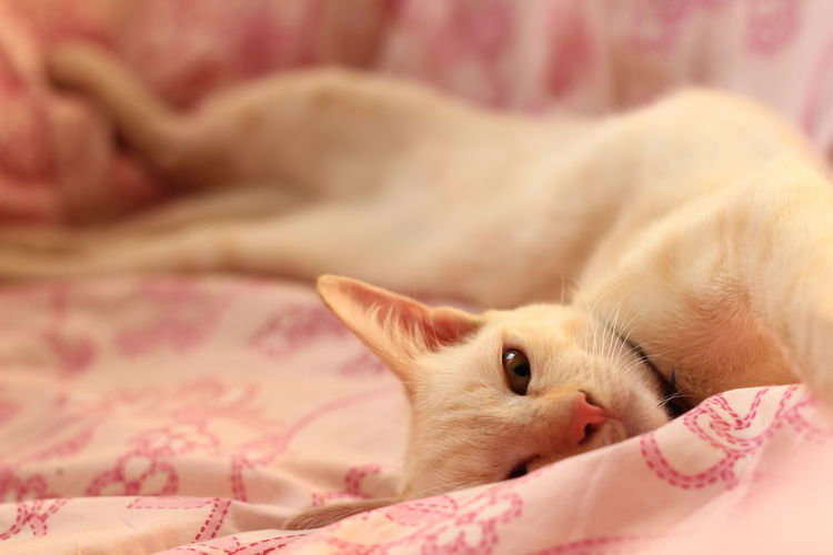 Animal Cat Cat Lovers Cat Portrait Cat♡ Close-up Day Domestic Cat Mammal No People One Animal Pets