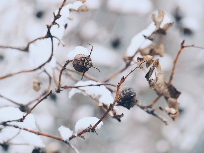 EyeEm Selects Focus On Foreground Close-up No People Day Nature Outdoors Branch Cold Temperature Plant Winter Beauty In Nature Fragility Frozen