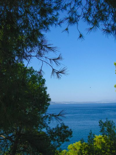 blue sea, blue sky and green trees Forest Forest And Sea Forest And Sky South Evoikos Gulf Greece Blue Sea Blue Sky Pine Trees Tree Water Sea Bird Branch Blue Sky Horizon Over Water Plant