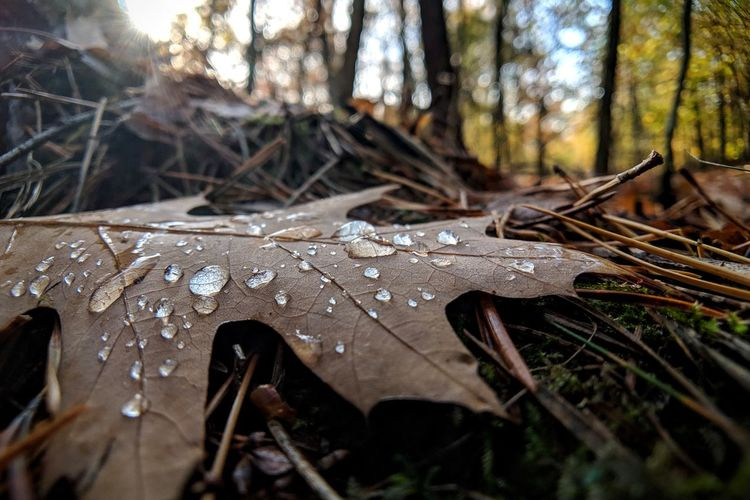 Raindrops on dry leaf in forest