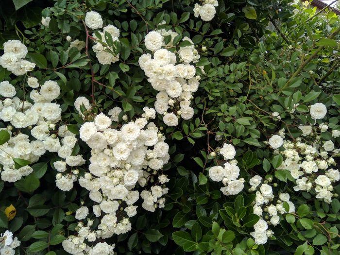 Galicia Flora