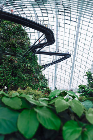 Cloud forest tropical dome in Gardens by the bay. Singapore. Canopy Gardens By The Bay Green Singapore The Traveler - 2018 EyeEm Awards Travel Architecture Botany Built Structure Canopy Walk Cloud Forest Dome Green Color Greenhouse Indoors  Plant Selective Focus Tropical Tropical Garden The Architect - 2018 EyeEm Awards