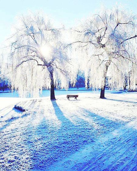 Winter Cold Temperature Snow Tree Bare Tree Frozen Outdoors Nature Day No People Beauty In Nature Tranquility Sky Landscape Sunset Earth Dreaming Photography Sunshine Winterwonderland Wintertime Beauty In Nature Frozen Nature Winter