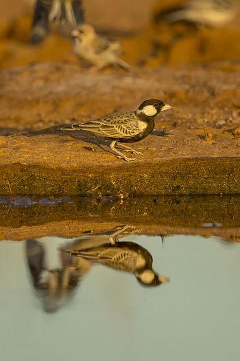 Close-up of bird by lake