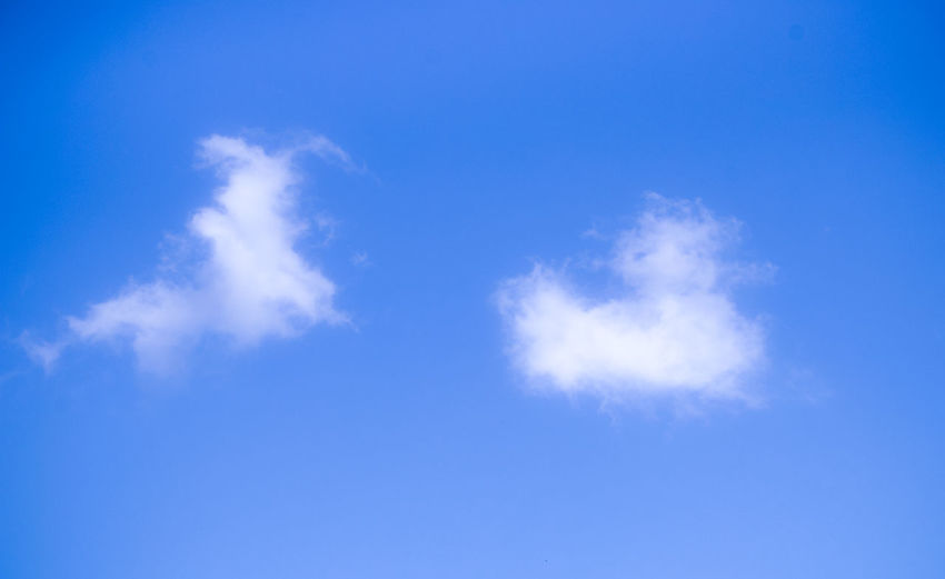 . The Bunny / The Duck Cloud Figure Atmosphere Backgrounds Beauty In Nature Blue Bright Bunny  Clean Cloud - Sky Cloudscape Copy Space Day Dramatic Sky Duck Environment Meteorology Nature No People Outdoors Sky Space Summer Sunlight Wind Wispy