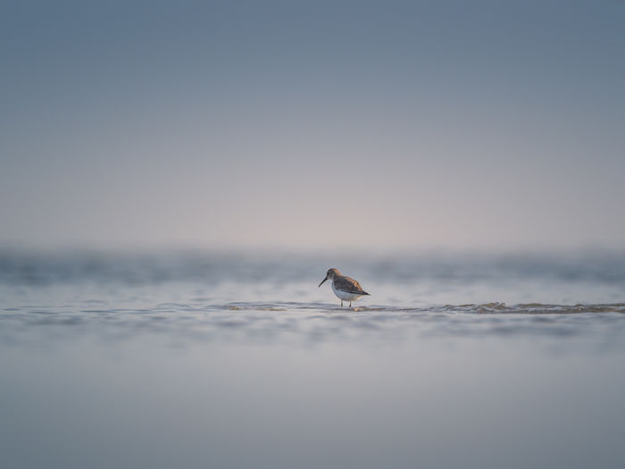 Water bird perching on sea