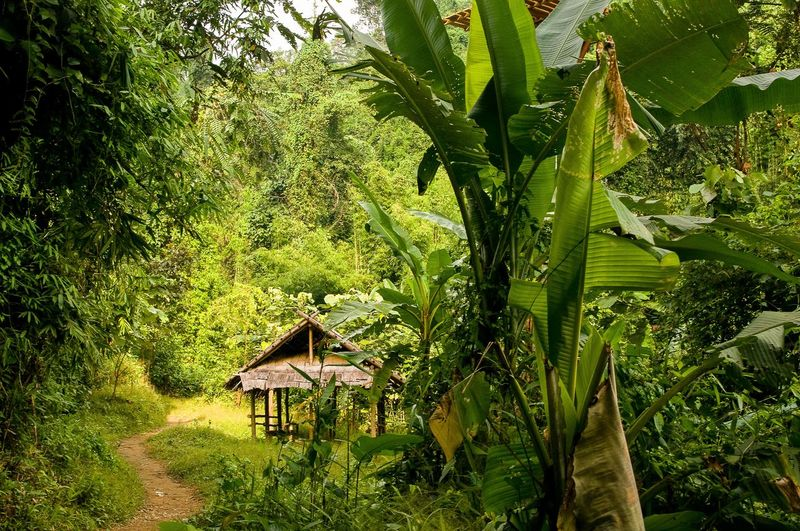 Nature Beauty In Nature Branch Forest Green Green Green Color Greenery Growth House Idyllic Laos Lush Foliage Nature Nature North Of Laos Plant Remote Scenics Solitude Tranquil Scene Traveling Tree Vang Vieng WoodLand Woods