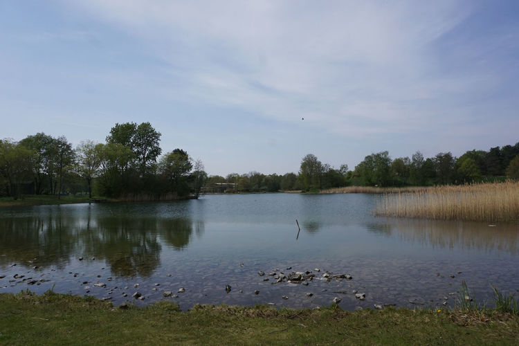 quiet day in Berlin Water Lake Plant Tranquility Tree Tranquil Scene Beauty In Nature Scenics - Nature Sky Reflection Nature Bird Vertebrate Animal Animal Themes No People Animal Wildlife Cloud - Sky Day Outdoors