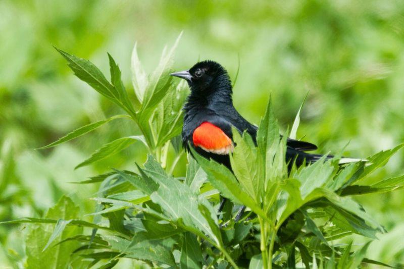 Bird Growth