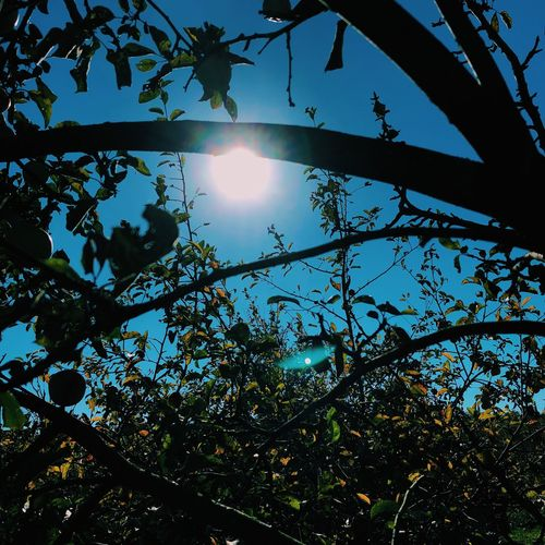 Tree Plant Low Angle View Sky Sunlight Sun Nature First Eyeem Photo