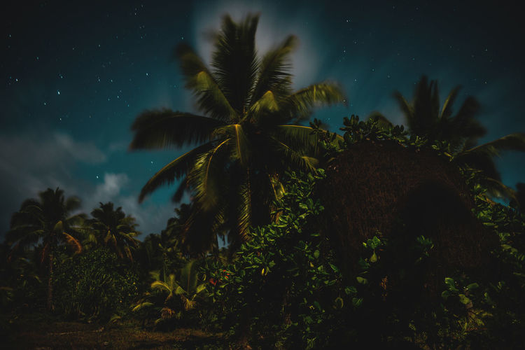 Moon Nights Cook Islands Atiu Moon MoonNights Mystic Night Photography Night Walks Aitutaki Cook Islands Dark Beauty Darkness And Light Fullmoon Haunting  Island Longtimeexposure Moonlight Movement Mysterious Mystical Nightscape Nightsky Over Grown Palm Trees Rarotonga Stars Straw