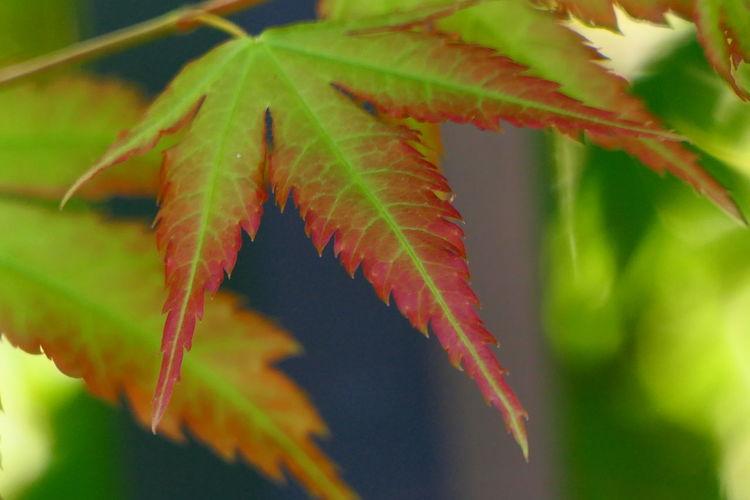 autumn is on