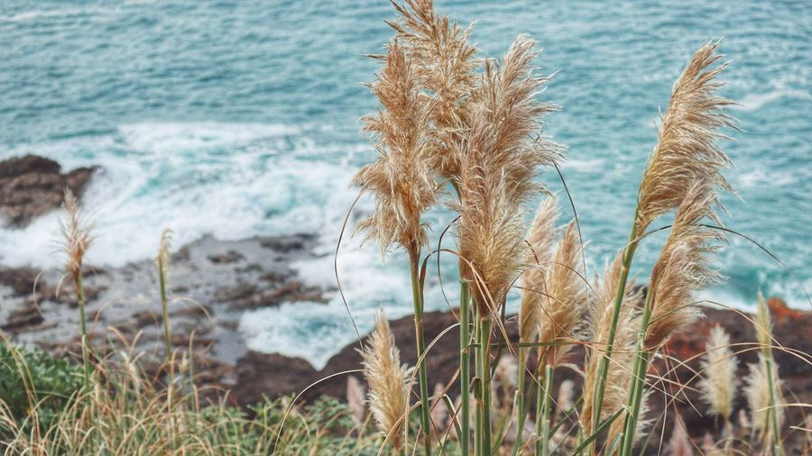 Rocks And Water Waves Waves, Ocean, Nature Water Sea Sky Close-up Plant Tall Grass Reed
