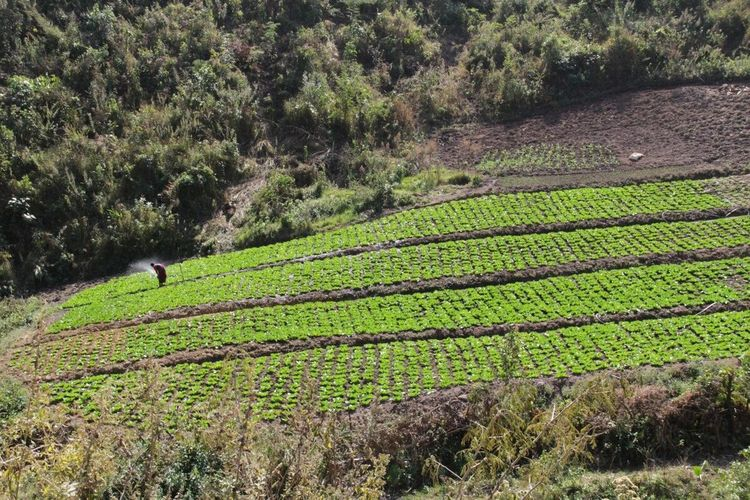 Myanmar Burma Greenfields Countryside