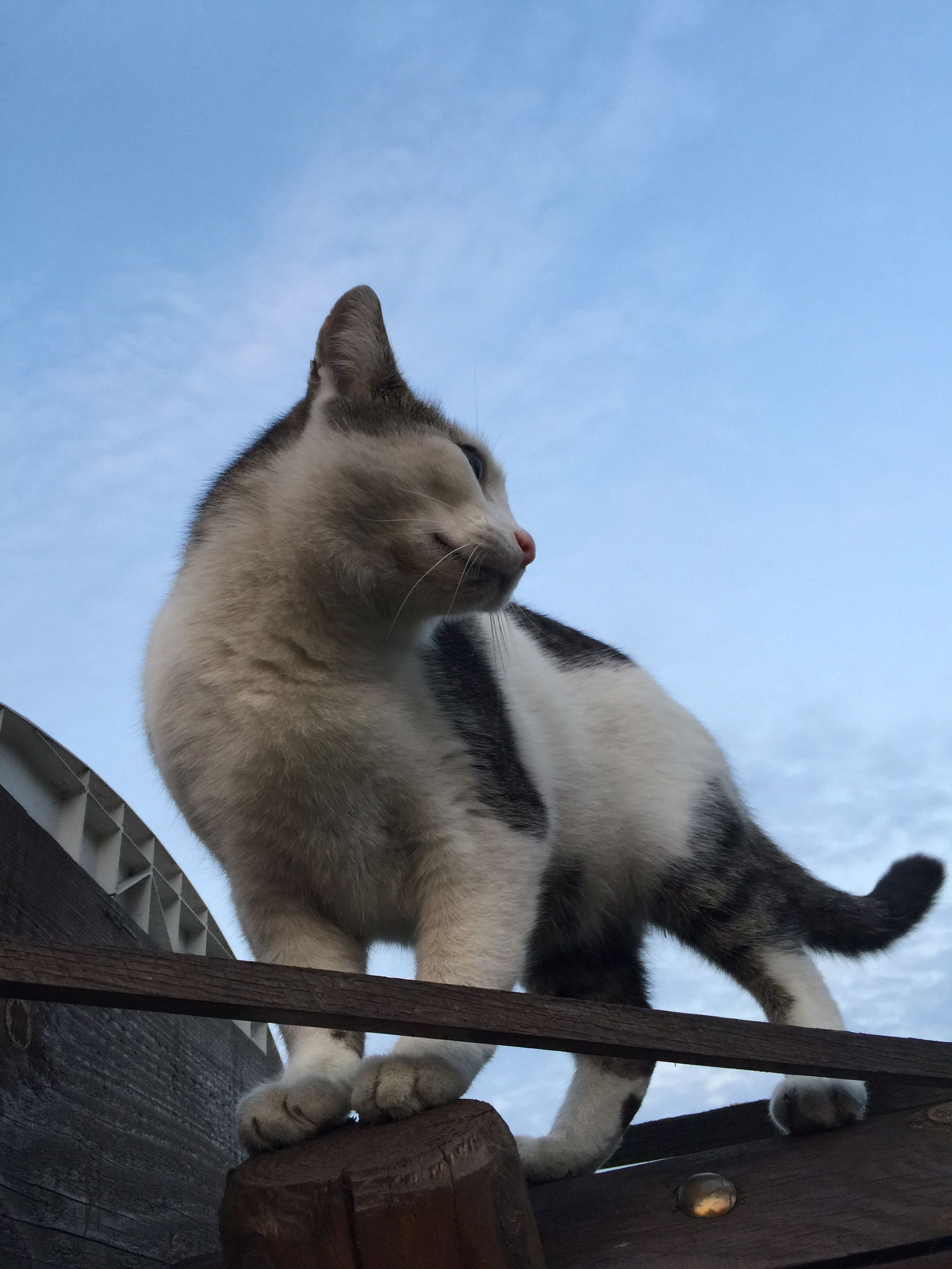 animal themes, one animal, mammal, sky, domestic animals, domestic cat, pets, low angle view, cat, railing, built structure, feline, outdoors, no people, day, looking away, architecture, cloud - sky, nature, side view