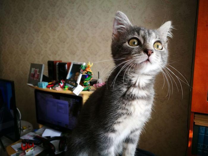 My cat ^^ Pets
